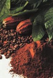 www_adm_com_en-US_products_food_cocoa_Documents_deZaan-Cocoa-Manual_pdf.jpg