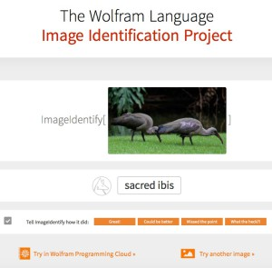 sacred_ibis___The_Wolfram_Language_Image_Identification_Project